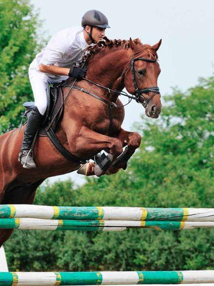 Monitor Experto De Equitación